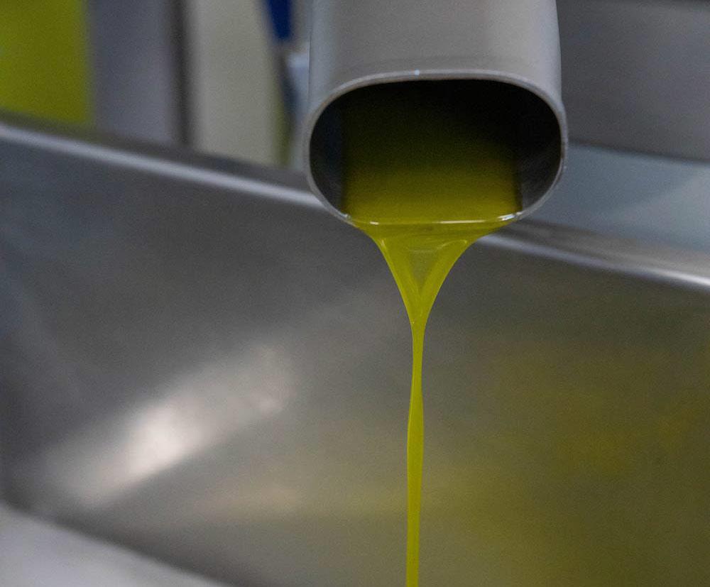 terre-di-molinara-olio-di-oliva